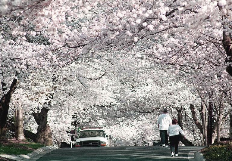 Regina Baierl: Hanami • Blüten betrachten